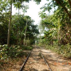 cambodia-battambang-bambootrain-3