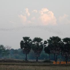 cambodia-battambang-batcave-3
