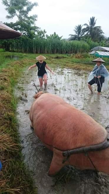 laos-livinglandfarm-1