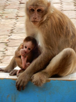 chiangrai-thailand-monkeytemple-2