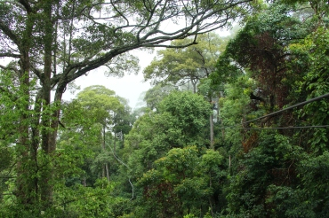 ziplining-jungleflight-chiangmai-thailand-5