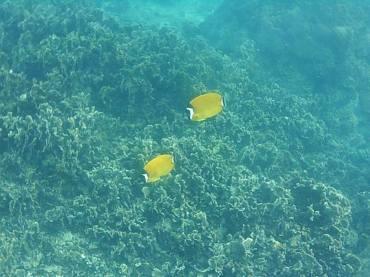 kohphiphi-diving (1)