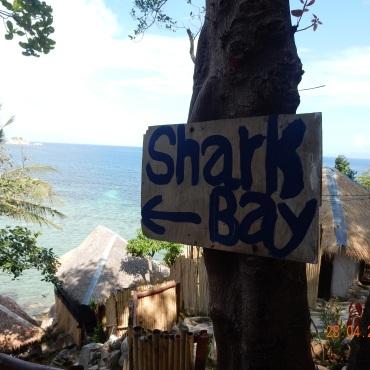 kohtao-sharkbay (1)