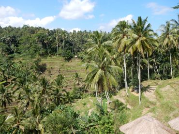 ubud-bali tegalalang rice terrace 02 (1)