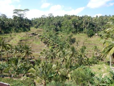 ubud-bali tegalalang rice terrace 02 (2)