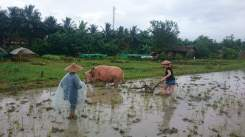 bucketlist-laos-ricefarm
