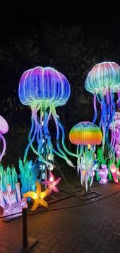 daytrip-chinalightfestival2020 (7)